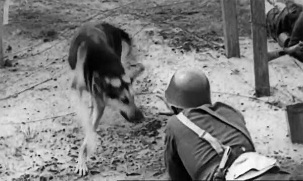 pies w Wojsku Polskim 1939